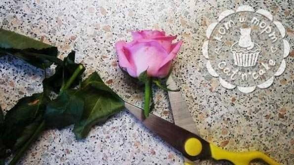 Как украсить торт живыми цветами02